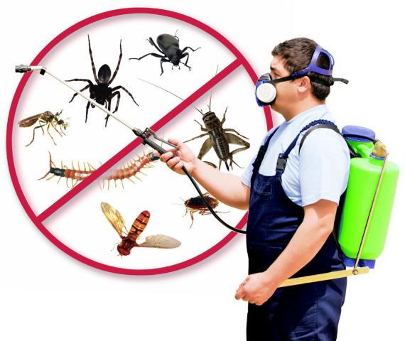 Kadıköy Böcek İlaçlama